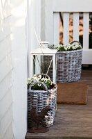 Violas in wicker planters and floor lantern on floor of wooden terrace