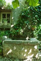 Vintage fountain with waterspout on climber-covered facade of rustic farmhouse