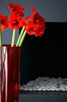 Orange amaryllis in red vase in front of contemporary fireplace with decorative pebbles