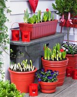 Terrace corner with planters of violas, hyacinths, crocuses and tulips
