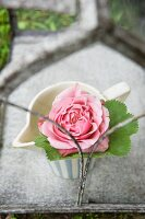 Pink rose in a pitcher