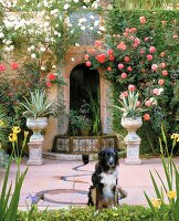 Dog in flowering garden