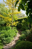 Sunny garden path