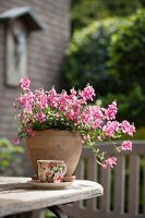 Romantic arrangement of flowering snapdragons and vintage-style teacup and saucer