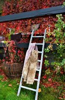 Blankets on ladder leaning against wooden beams of veranda covered in red vine foliage