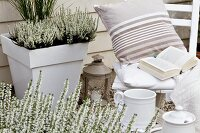 Potted white heather and wooden chair on terrace