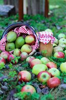 Harvest of apples and pears and preserving jar decorated with red and white fabric arranged on lawn