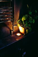 Dramatically lit, potted house plant on shelf