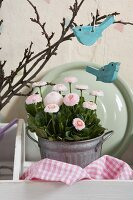 Romantic arrangement with two pale blue, bird-shaped decorations hanging on spring branches and flowering pink bellis in zinc pot