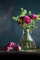 Purple chrysanthemums in glass vase