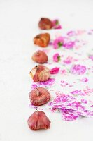 Row of flower bulbs on paper decorated with purple floral pattern