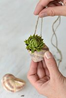 Tiny succulent planted in snail's shell tied on cord