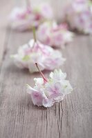 Hydrangea florets on wooden board