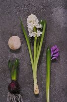 White and purple hyacinths on stone slab