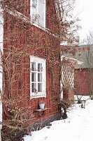 Falu red wooden house with white windows in snowy garden