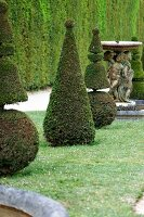 Topiarised boxtrees and a fountain in in the Garden of the Palace of Versailles