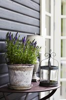 Potted lavender and candle lantern on console table against wooden wall
