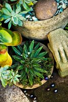 Various potted succulents in garden