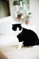 Black and white cat sitting on crocheted lace blanket