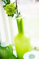 Flower in lime green glass vase