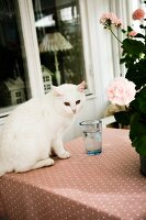 White cat next to drinking glass and potted geranium on table with patterned tablecloth