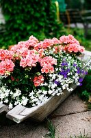 Wooden trough planted with various flowering plants