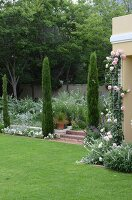 Cypress trees flanking steps leading to beds on raised level; climbing rose 'Eden' to one side growing up house façade