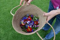 Woven basket of edible flowers: cornflowers, nasturtiums and borage