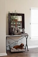 Dachshund lying in vintage-style metal dig bed under Art Nouveau console table with antique vase and small, potted olive tree