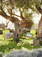 Yellow rocking chairs with cushions below gnarled trees in sunny garden
