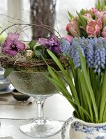 Grape hyacinths, vase of tulips and moss arrangement in glass goblet on dining table