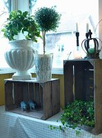 Various planters holding small tree and climbing plants on rustic wooden crates in front of window