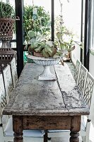 Plants in urn on rustic wooden table and chairs painted white in loggia-style room