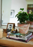 House plant on stack of books in front of mirror