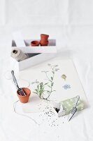 Forget-me-not seeds in small gift box and flower pot on botanical drawing