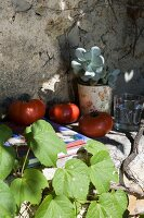 Freshly picked tomatoes, potted succulent and book on shelf built into climber-covered façade