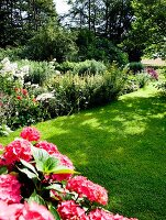 Pink-flowering hydrangea and flowering plants in summer garden with clipped lawn