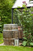 Old wooden barrel used as water butt against greenhouse wall and zinc watering can in green summer garden