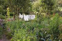 Laundry hung out to dry and rustic, wooden bean frame in flowering cottage garden