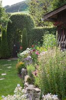 Bed of flowering plants and stepping stones in lawn leading to garden gate in hedge arch