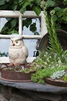White owl ornament and metal dishes planted with succulents in garden
