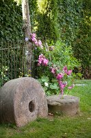 Large millstone in front of pink-flowering climber in garden