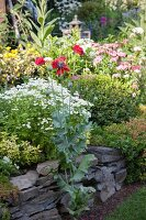 Flowering plants in bed with stone surround in garden