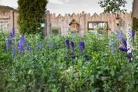 Blue delphiniums in front of bird nesting boxes on wooden fence
