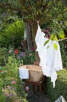 White laundry hanging on washing line strung from tree in garden and laundry basket on old wooden chair