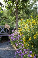 Yellow loosestrife and purple flowers in front of wooden bench in garden