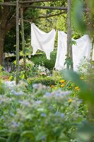 Flowering plants, washing hung on washing line strung between trees and beans growing up beanpoles in garden