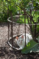 Cat behind wrought iron fence in garden