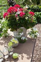 Red geraniums in stone pot on garden table