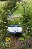 White lace cushions on blue-painted wooden bench below climber-covered arbour in garden